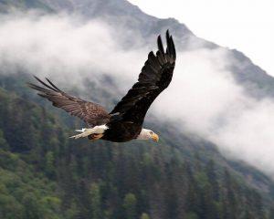 eagle_29